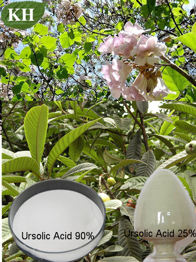 Ursolic Acid 25%-98% From HPLC Loquat Leaf Extract pictures & photos
