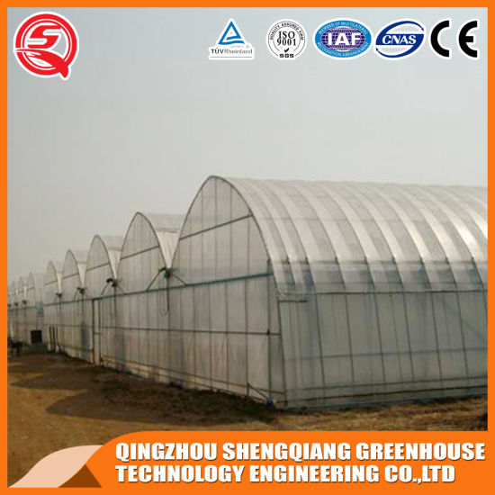 Agriculture Productive Multi-Span Plastic Film Greenhouse for Tomato/Strawberry/Cucumber/Garden Cultivation