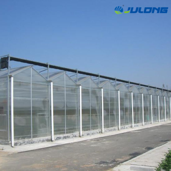 Hot Sale Dutch Type Venlo Polycarbonate Greenhouse for Agriculture Vegetable Garden Planting