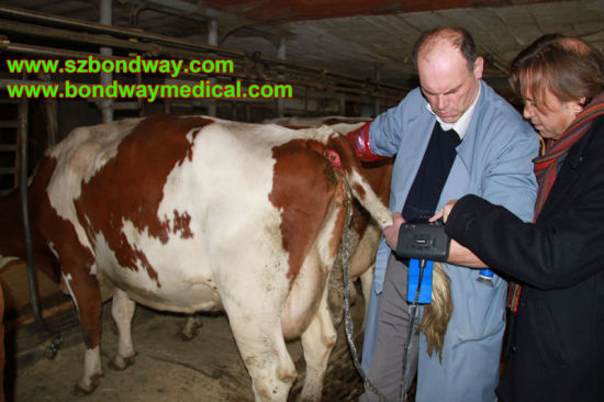 Digital Veterinary Ultrasound Scanner Equine, Bovine, Canine, Faline, Llama, etc pictures & photos