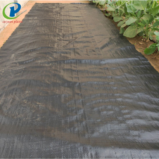 Best Commercial Plastic Weed Control Landscape Fabric for Outdoor Goods