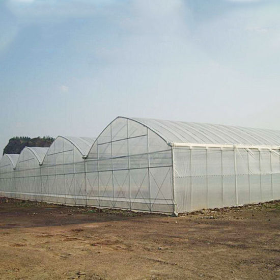 Single Span Greenhouse with Hydroponic System for Melon