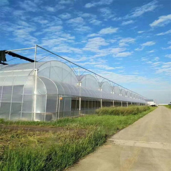 Black and White Film Mushroom Greenhouse with Hydroponic System