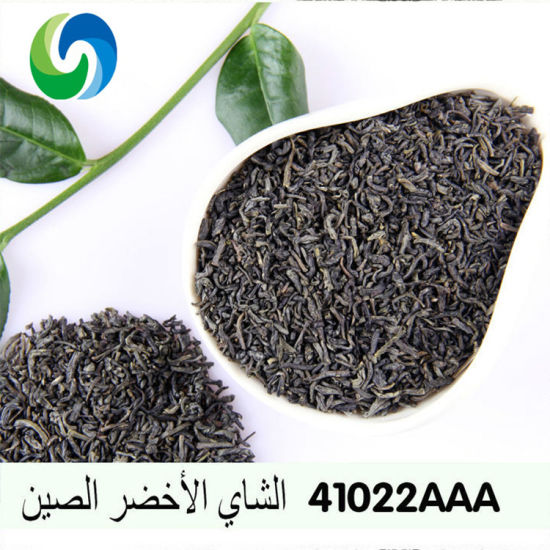 Wholesale Chinese Green Tea High Moutain China Organic Tea