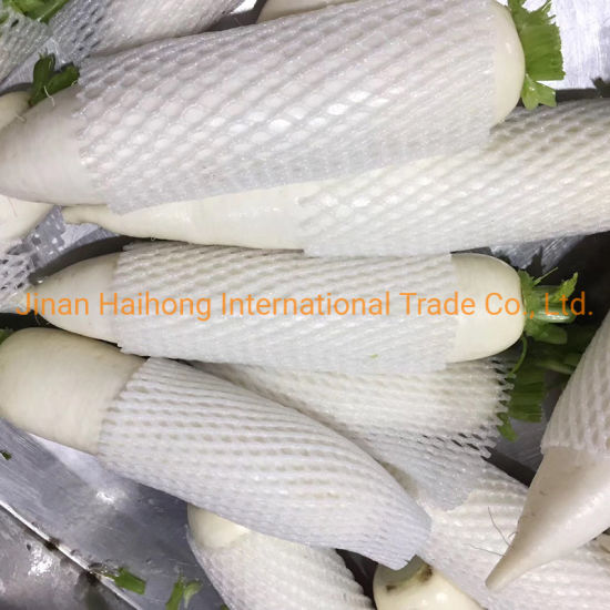 Wholesale New Crop White Radish with Competitive Price pictures & photos