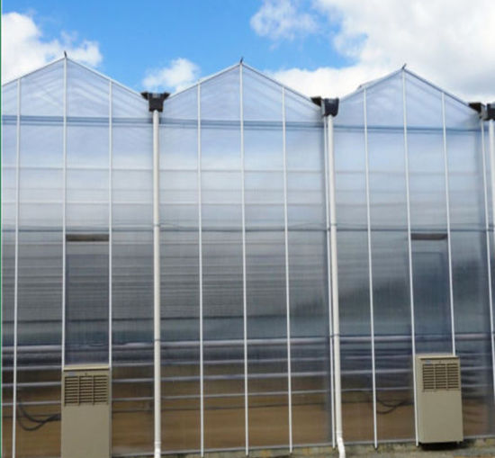 Venlo Type Glass Greenhouses for Planting Vegetables/Flowers/Fruit Polycarbonate Sheet Greenhouse Cooling Pad Greenhouse Grew Tent