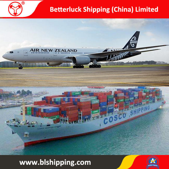LCL Shipping From China to New Zealand Auckland Sea Freight