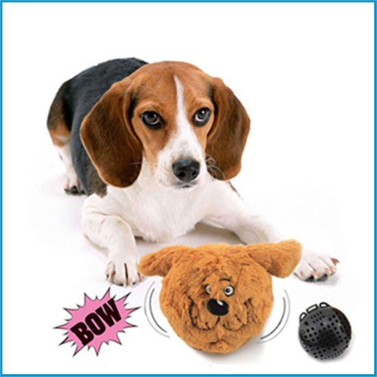 Image result for images for bouncy dog and cat toy