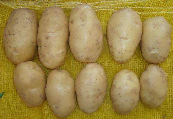 Fresh Long Shape Potatoes