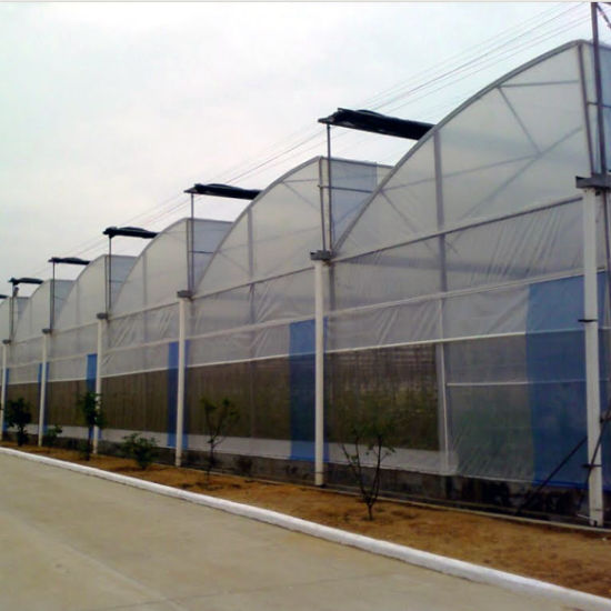 Multi Span Gothic Film Greenhouse for Vegetable Growing pictures & photos