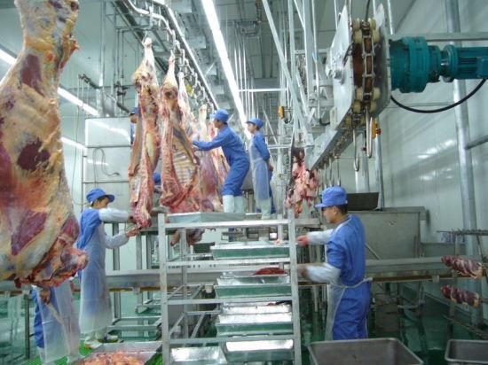 Cattle Slaughterhouse
