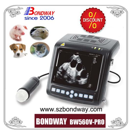Vet Ultrasound Animal Ultrasound Pig/Swine Ultrasound pictures & photos