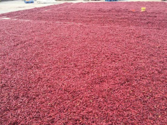 High Quality New Crop Dried Chili for Sale pictures & photos