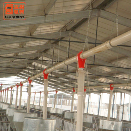 Automatic Auger Feeding Line for Pig Sow