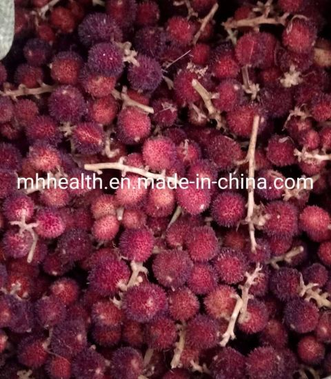 Sell 100% Pure Natural Medicine Amomum Villosum