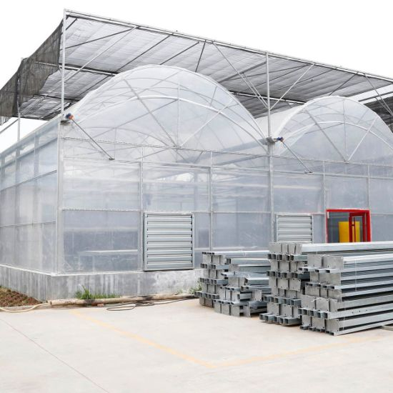 Multi-Span Hydroponic Tunnel Film Greenhouse