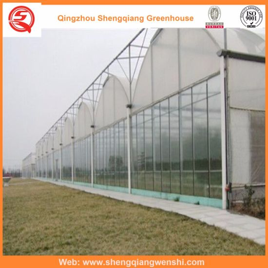 Arch Type Plastic Greenhouse for Planting Vegetables/Flowers