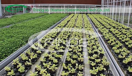 Multi-Span Glass Greenhouse for nursery