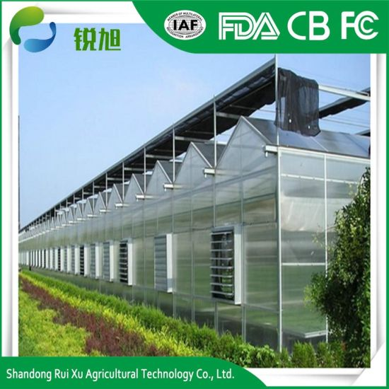 Greenhouse with Polycarbonate Sheet Roofing for Tomato and Mushroom  Planting Greenhouse Full System