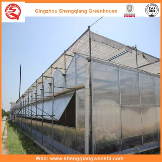 Agriculture Multi Span PC Sheet Greenhouse for Vegetables/Flowers/Tomato pictures & photos