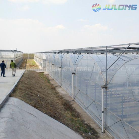 Ce Certificate Agriculture Multi-Span Po Film Plastic Greenhouse