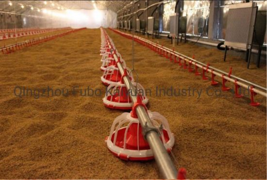 Automatic Feeding System for Chicken House/Broiler/Poultry equipment