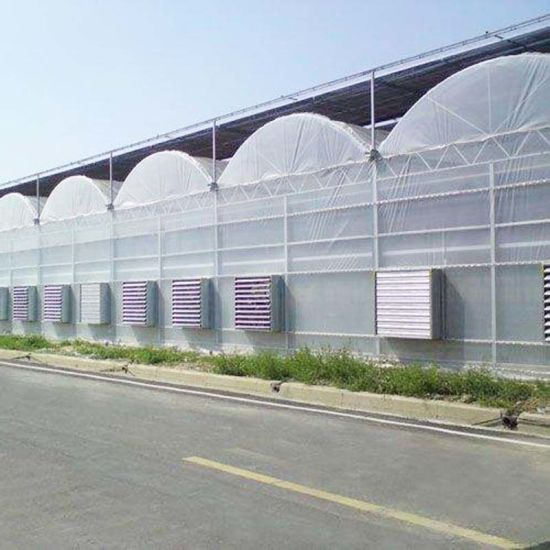 Double Layer and Multi-Span Agricultural Greenhouse