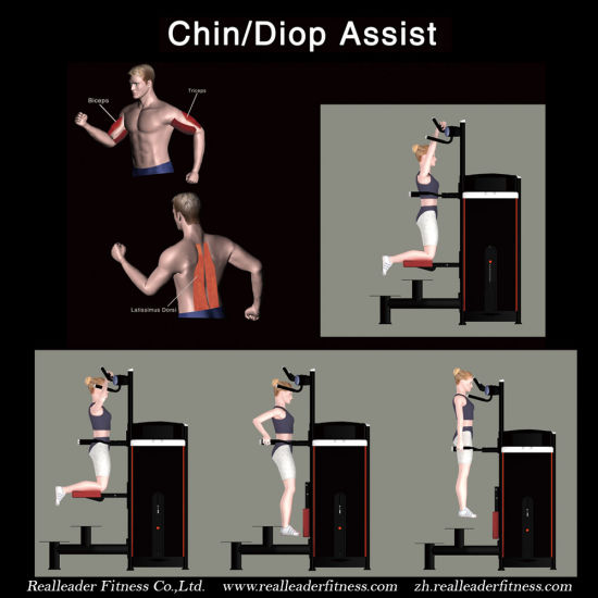Gym Equipment Fitness Equipment for Chin/DIP Assist (M7-1010) pictures & photos