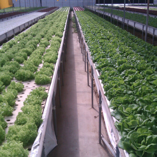a Tiled Hydroponics System for Lettuce pictures & photos