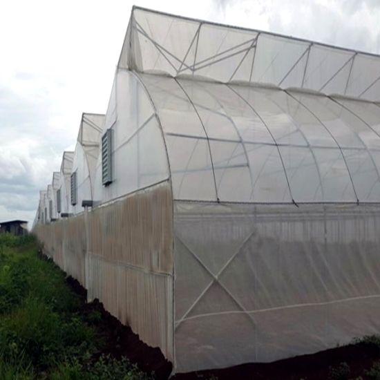 Multi-Span gothique de grande taille pour la ferme de serre de Film/Jardin