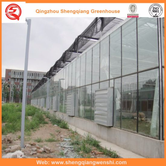 Chine Chambres vertes en verre de Multi-Envergure de jardin ...