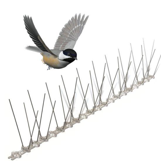 Oiseau défense pointes pigeons défense Oiseau Spikes Acier Inoxydable Spikes Oiseaux Pics