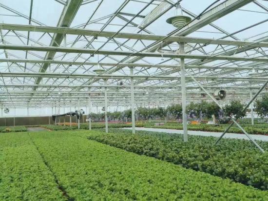 Chine Jardin de fleurs Légumes Fruits La plantation d\'Farm ...