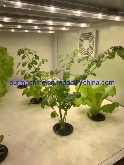 Chine Système de serre de jardin hydroponique croissance ...
