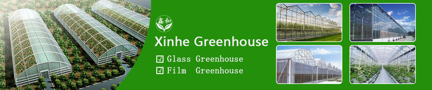 Qingzhou Xinhe Greenhouse Horticulture Co., Ltd.