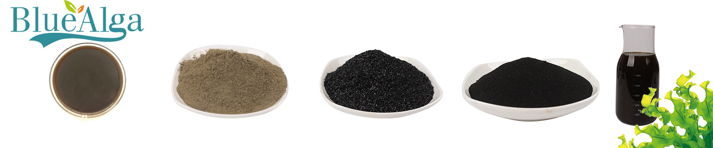 Qingdao Blue Treasure Seaweed Biotech Co., Ltd.