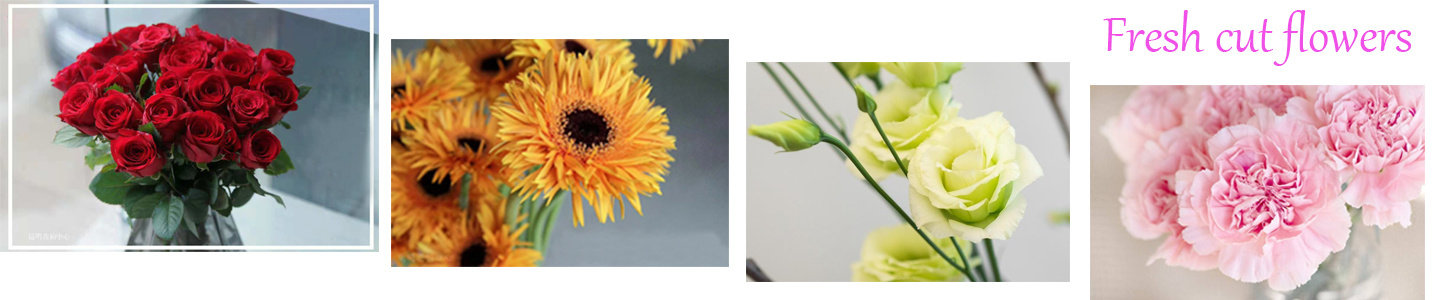 Kunming Gold Petal Flower Co., Ltd.