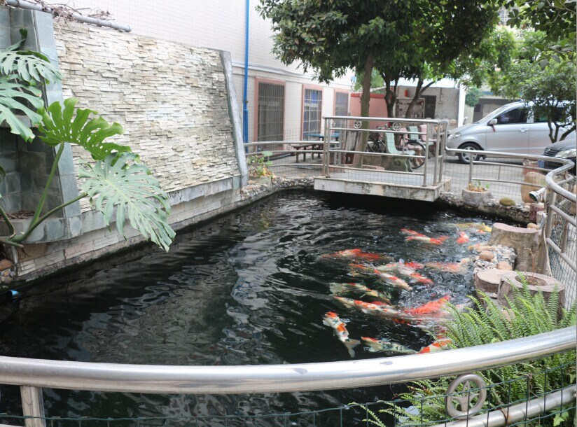 we feed koi
