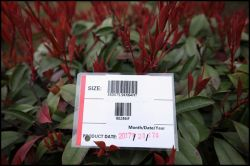 Barcode label service supply against customer′s request