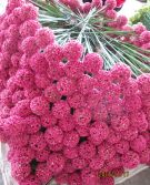 best selling artificial flowers of Onion grass ball flower