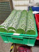 Z-LION Wet Floor Diamond Polishing Pads for our Customers
