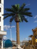 Date Palm Tree Project