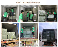 Ship container orders monthly