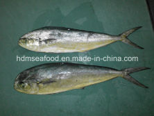 Sales information:Supply new fresh fish