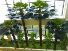 Fan Palm Groups Landscape