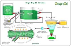 Breakthroughs in Oil Extraction from Algae