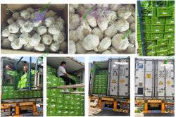Garlic to Qatar