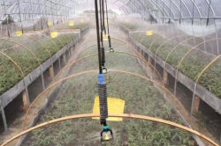 Micro-sprinkler irrigation for greenhouses