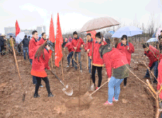 Adding green for Baoji, Longxiang stuff planted trees in hometown.