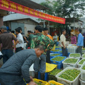 Nicepal help Hainan farmers to settle lots of unsalable limes
